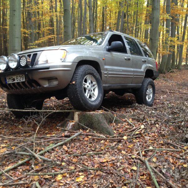 Flex on stump